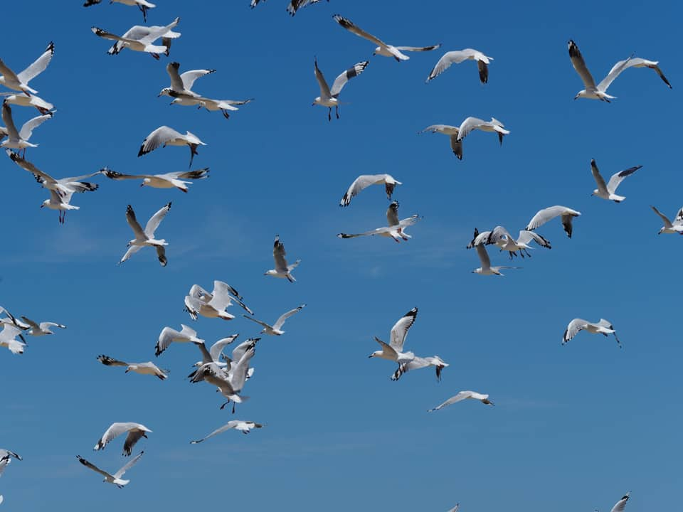 Understanding Camera Autofocus | Seagulls Flying