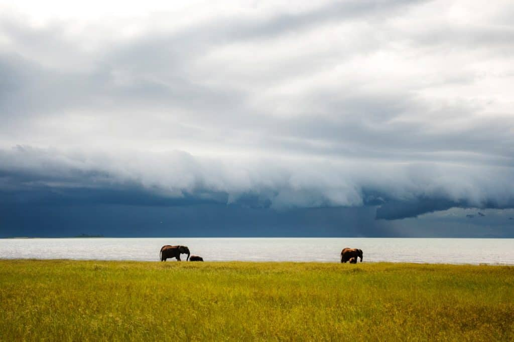 Bumi Hills Elephants And Storm - Lauren Bath | Pixinfocus