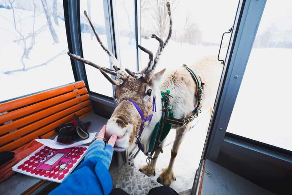 Reindeer Nose Niseko - Lauren Bath | Pixinfocus
