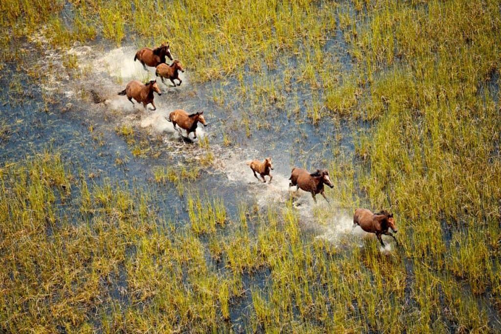 Wild Horses - Lauren Bath | Pixinfocus