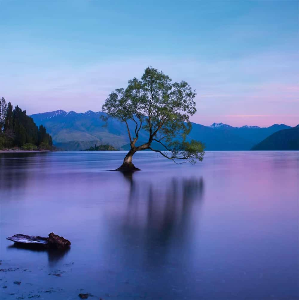 Wanaka Tree, New Zealand. Learn Long Exposure