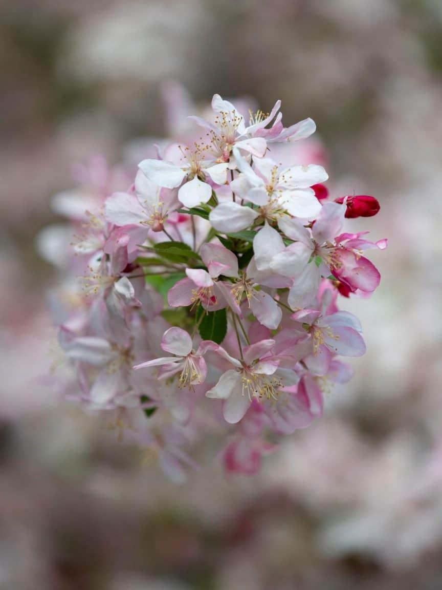 Photo of flowers taken with M.Zuiko 40-150mm F/2.8