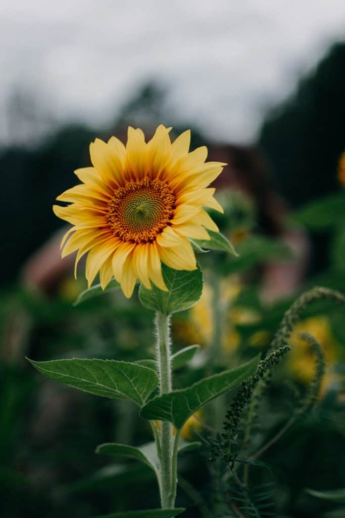 flower photography mistakes