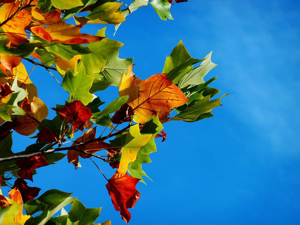 colorful Fall Photography