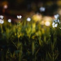 How to Create a Bokeh Effect in Your Photos