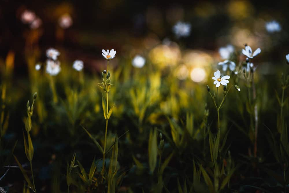 Photo of Flowers with Bokeh Background