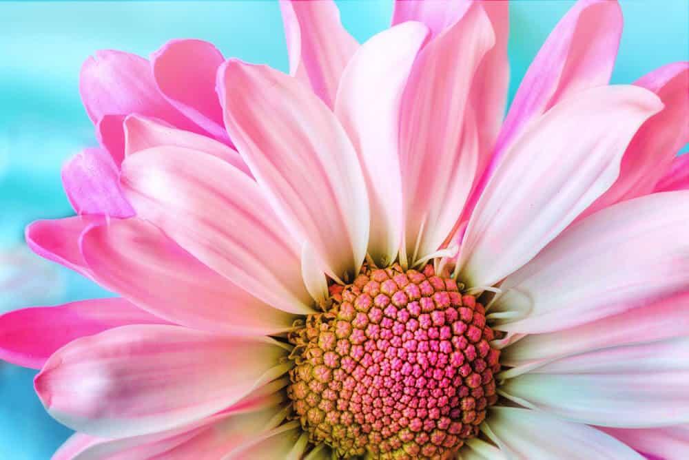 macro photo of flower