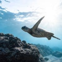 Underwater Photography Tips for Beginners